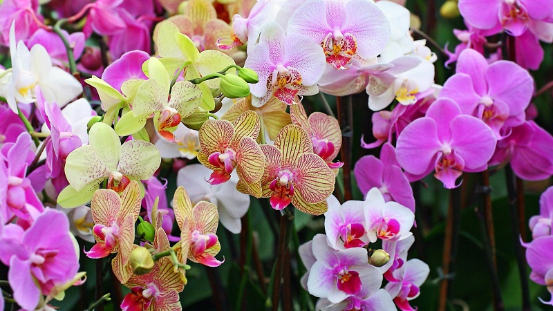 Planting Orchids