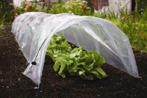 gardening-in-january-follow-the-calendar-ends-meet