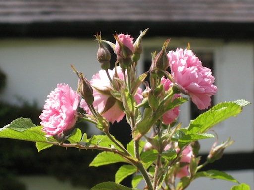 gardening-work-waiting-for-the-summer