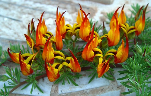 treat-flowers-and-flower-beds-in-the-month-of-october