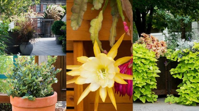 10-wonderful-plants-that-can-also-be-grown-in-pots