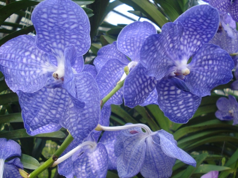 treat orchids