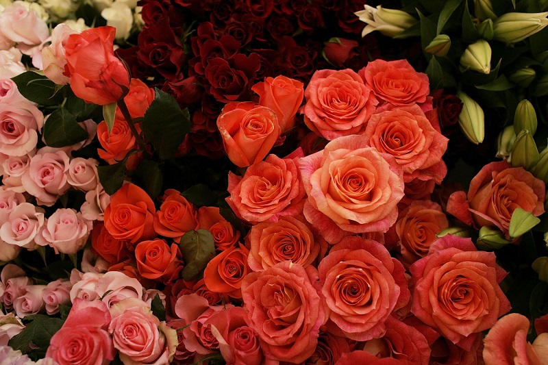 Guide-to-the-choice-of-roses