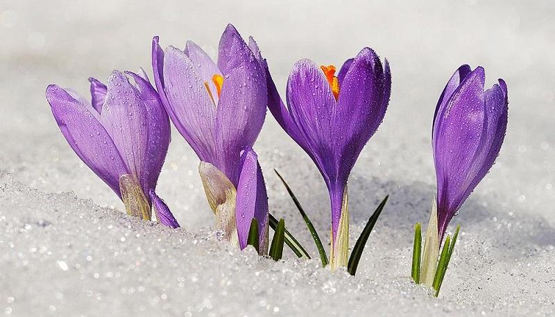 plants that bloom in winter