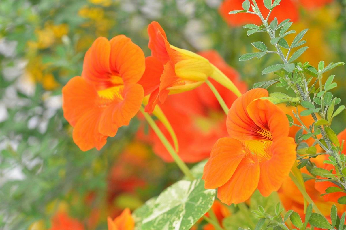 Flower Garden From Edible Flowers