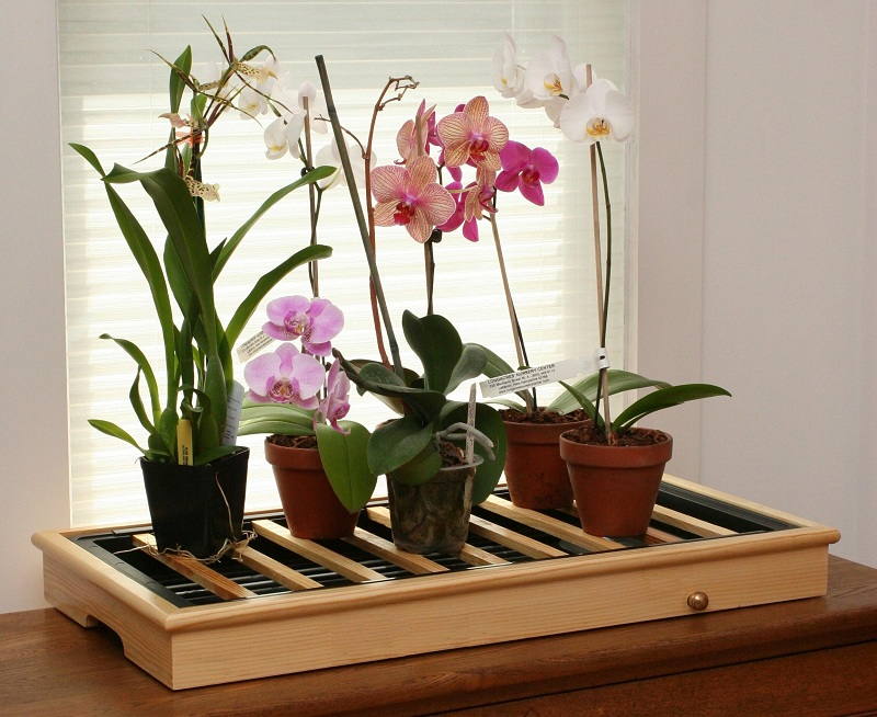 How To Care For An Orchid In A Pot?