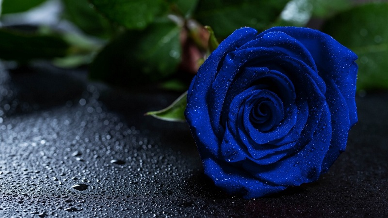 How To Paint A Rose Blue At Home- Instructions