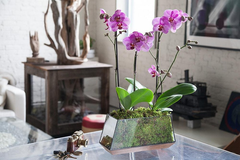 Rules Care For An Orchid At Home