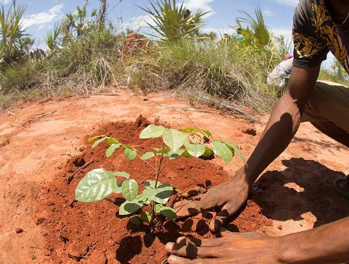 Reforestation Plans